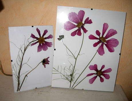 kurutulmus çiçekler