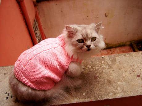 kedim pembe kazağı ile