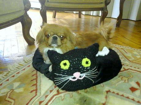 Köpeğim Otis kuruldu kedimin minderine:)