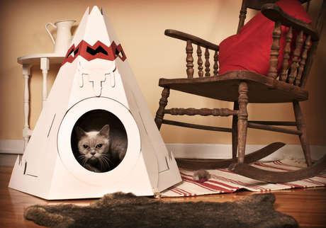 kutudan kedi evi
