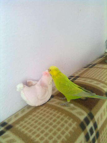 vee limon yeni oyuncağıyla oynarken:)