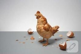 Yumurta mı tavuktan?Tavuk mu yumurtadan?