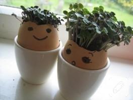 Yumurtadan saksı:)