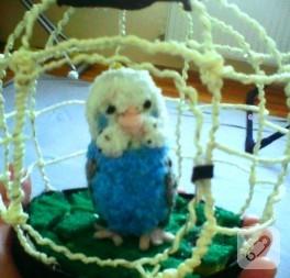 Maviş muhabbet kuşu
