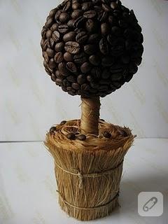 Mis gibi kahve ağacı yapalım…