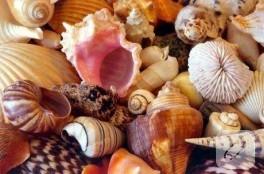 deniz kabuklarıyla neler yapabiliriz?