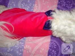 Köpek kıyafeti yapımı